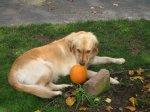 Emma_and_Pumpkin1.jpg