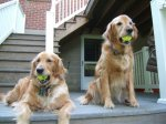 Emma and Sandy with Tennis Balls(a)_1.jpg
