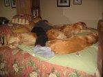 Napping2.jpg