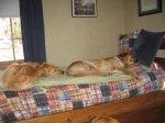 NappingPoses2.jpg