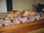 NappingPoses3.jpg