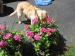 PlantingFlowers108.jpg