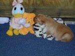 PuppySiblings.jpg