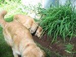 Weeding4.jpg