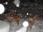 WinterStorm1_1.jpg