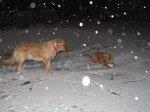 WinterStorm2.jpg