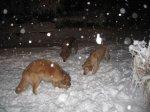 WinterStorm4_1.jpg