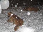WinterStorm6_1.jpg